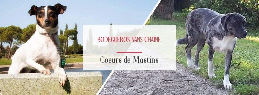Bodegueros Sans Chaine